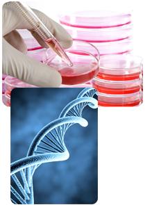 gene_experiment